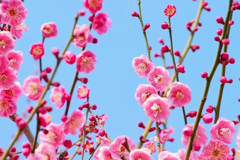 春を待ちわびて…
